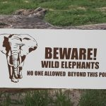 Chobe to Elephant Sands.